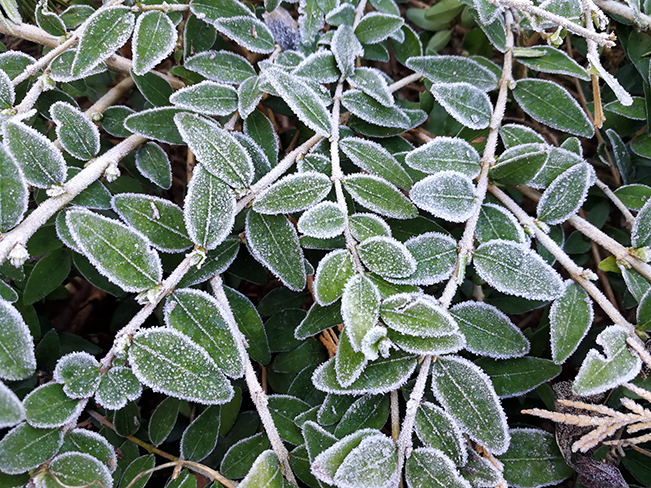 Frost im Winter