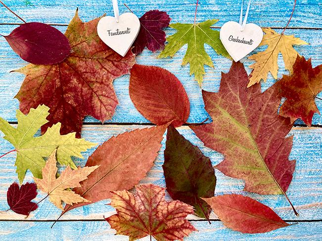 Bunte getrocknete Herbst-Blätter